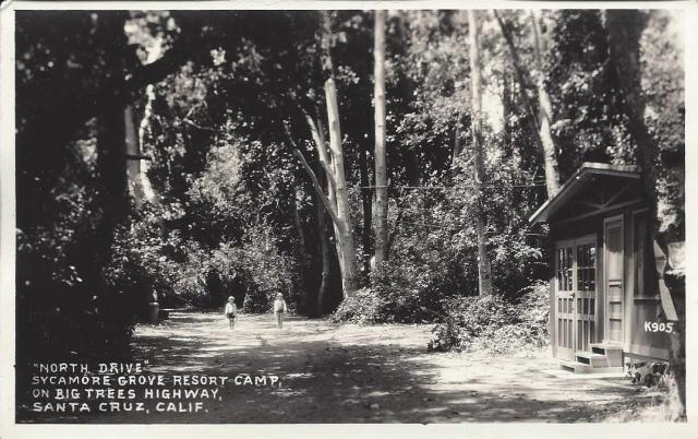 Sycamore Grove Resort Camp postcard, front. Courtesy of Dan Selling.